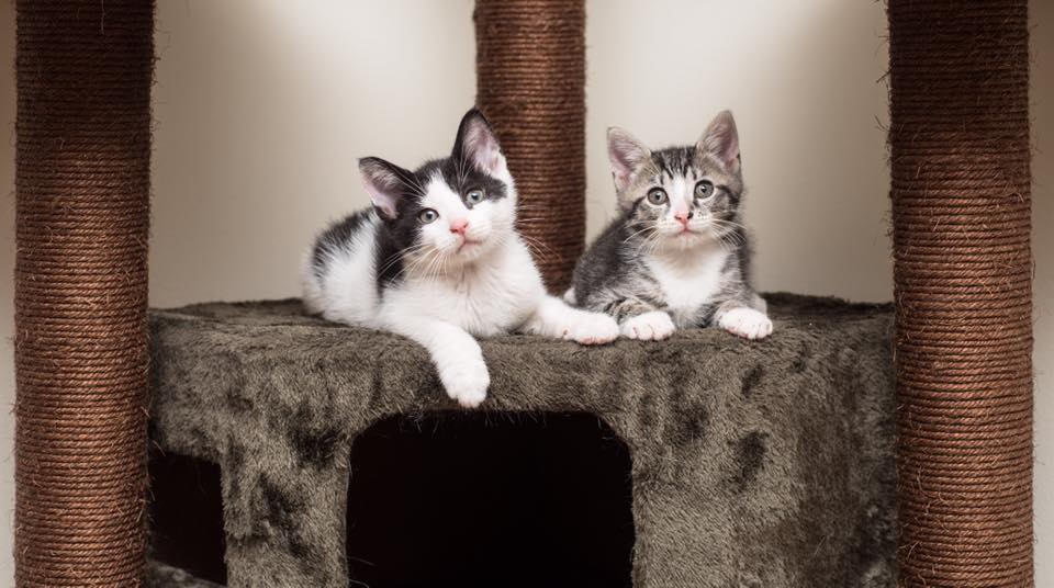 Twig and Bud found their forever home together, and you can follow them on Instagram at  Phillycatsquad .