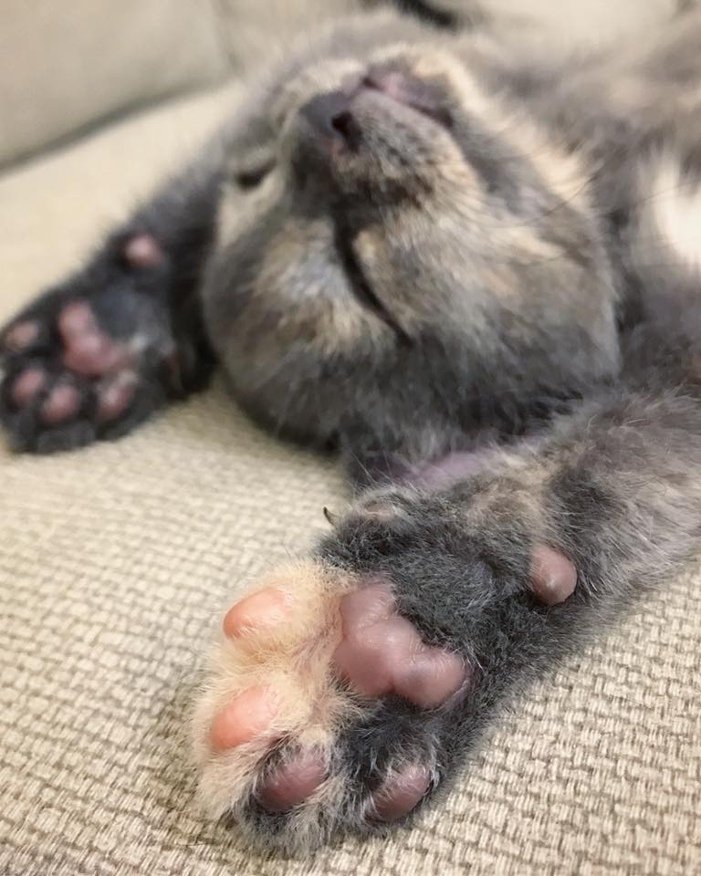 Put your paws in the air if you just don't care.