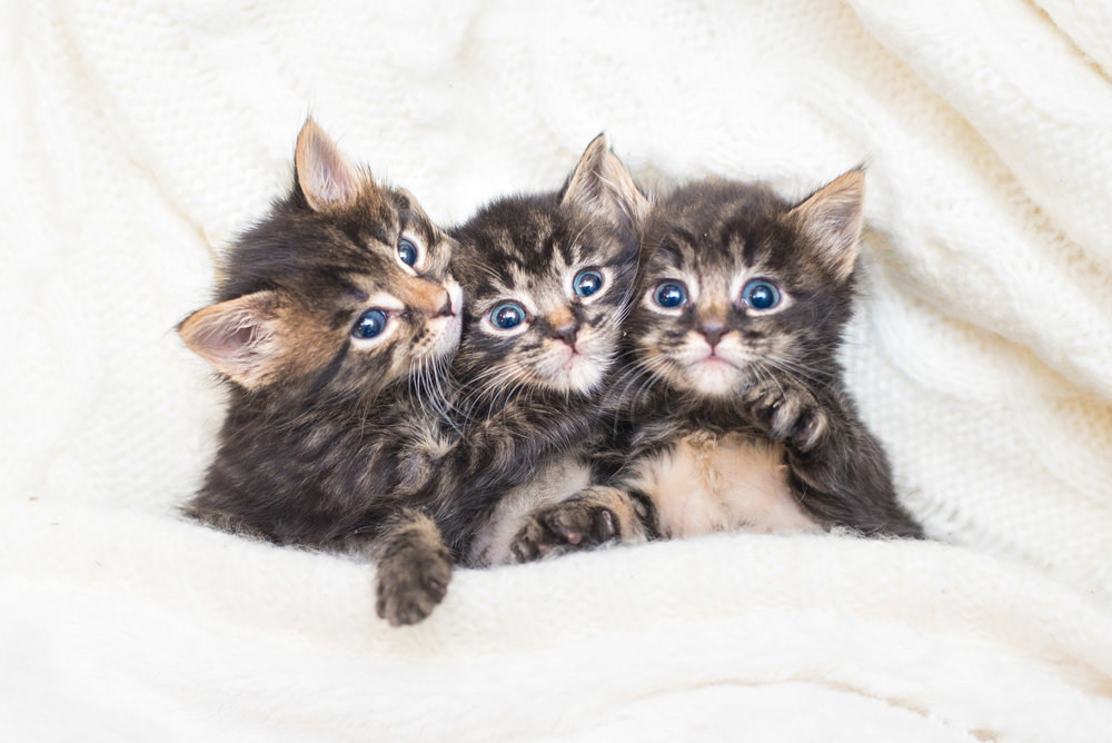 Upcoming Events — Kitten Lady