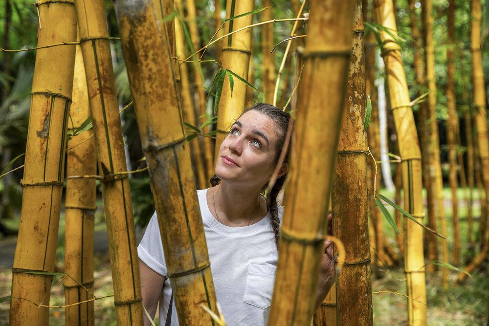 Bambo, Botanical Gardens Mauritius