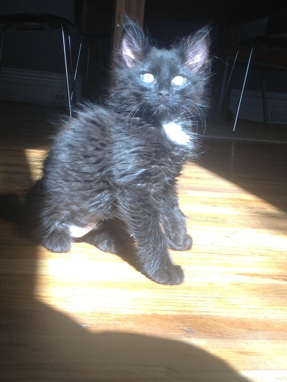 Baby dreaddy fuzzy electric Millie