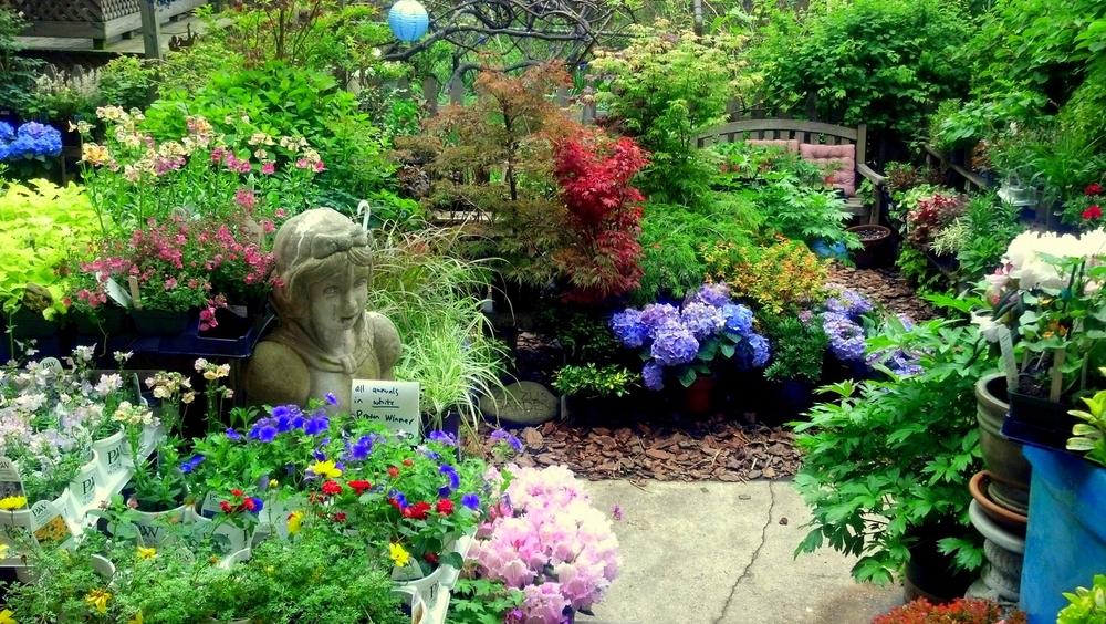 garden may 2012.jpg