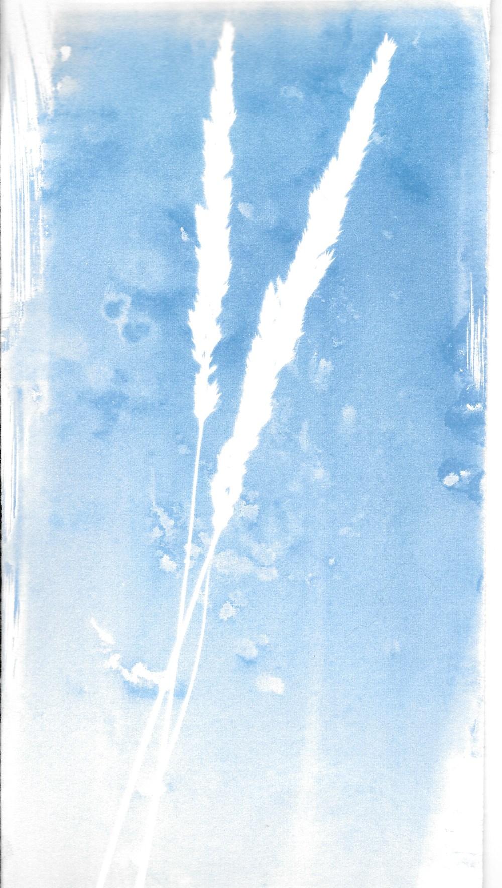 cyanotype 3.jpeg