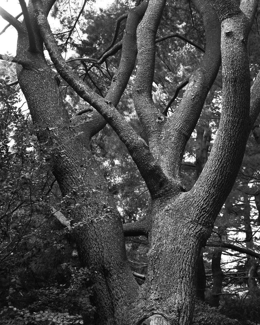 arboretum 4.jpg