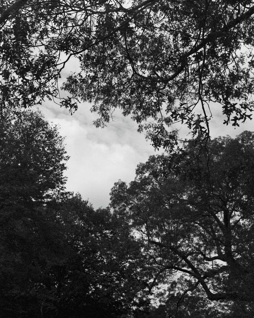 arboretum 8.jpg