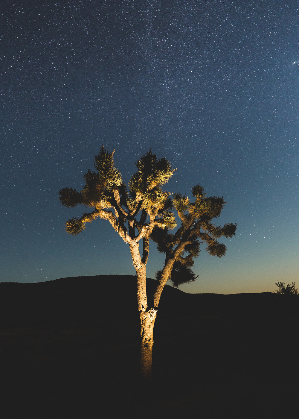 Night-Tree-1.jpg