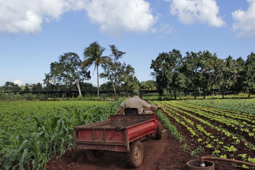 Tractors are a rare sight at OVA. Photo by Kassondra Cloos.