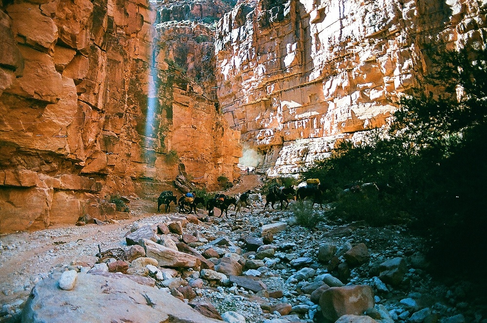 Tourists pack their car camping tents, air mattresses and suitcases on mules heading into Supai Village. Mail comes out of the canyon on hoof, too - Supai is the only place in the U.S. where the Postal Service still effectively relies on the Pony Express.
