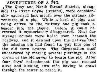 1912 'ADVENTURES OF A PIG.', Sunday Times (Sydney, NSW : 1895 - 1930), 17 March, p. 15, viewed 20 December, 2013, http://nla.gov.au/nla.news-article126063788