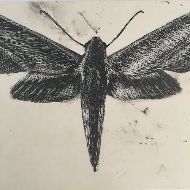 Turns out you cannot use oil based ink on this scratchbord. It smears even an hour later. Hmmm. Now I need to figure out how to fix it.... #learning #naturalhistory #moth #inprogress