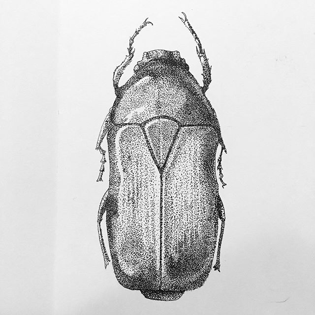 So over stippling right now. But done. #beetle #stipple #ink