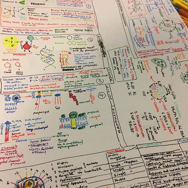 So many colours. Memory aid (aka cheat sheet) for biology exam. Curious to see if I will actually use it. Now to put all the genetic stuff on the back...