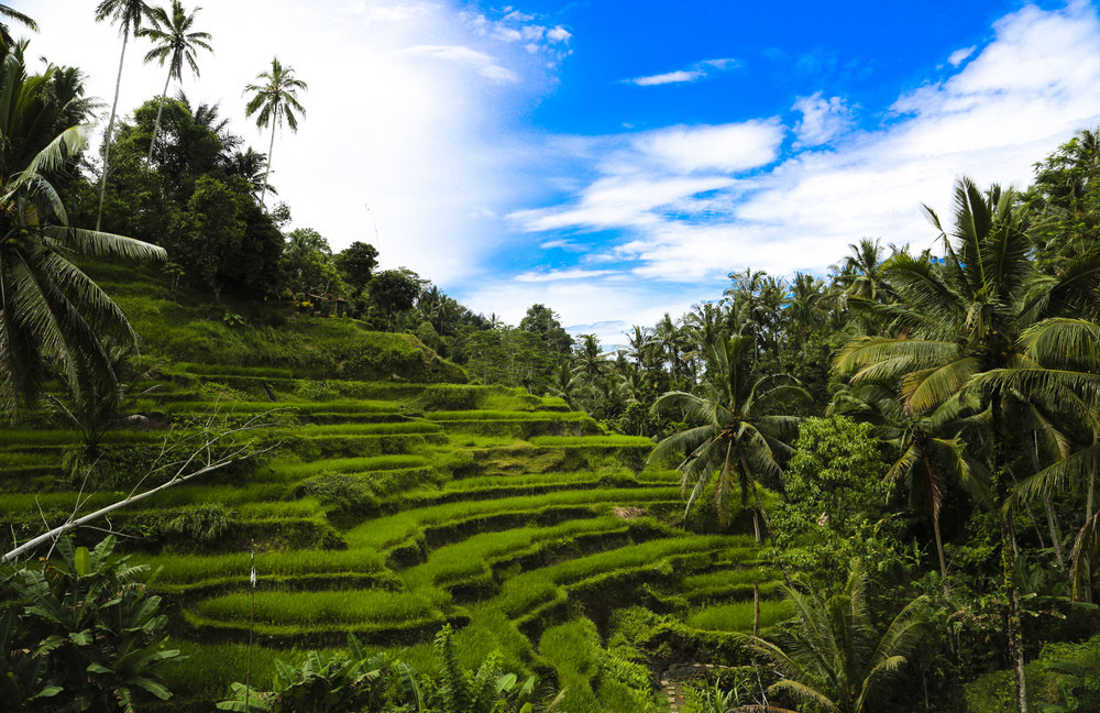 BAlI - a bEautifuL paradise