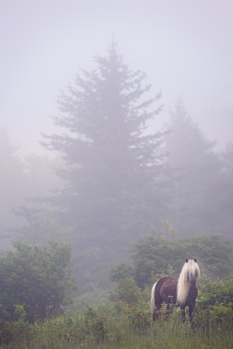 The Cocoa Stallion of Wilburn Ridge