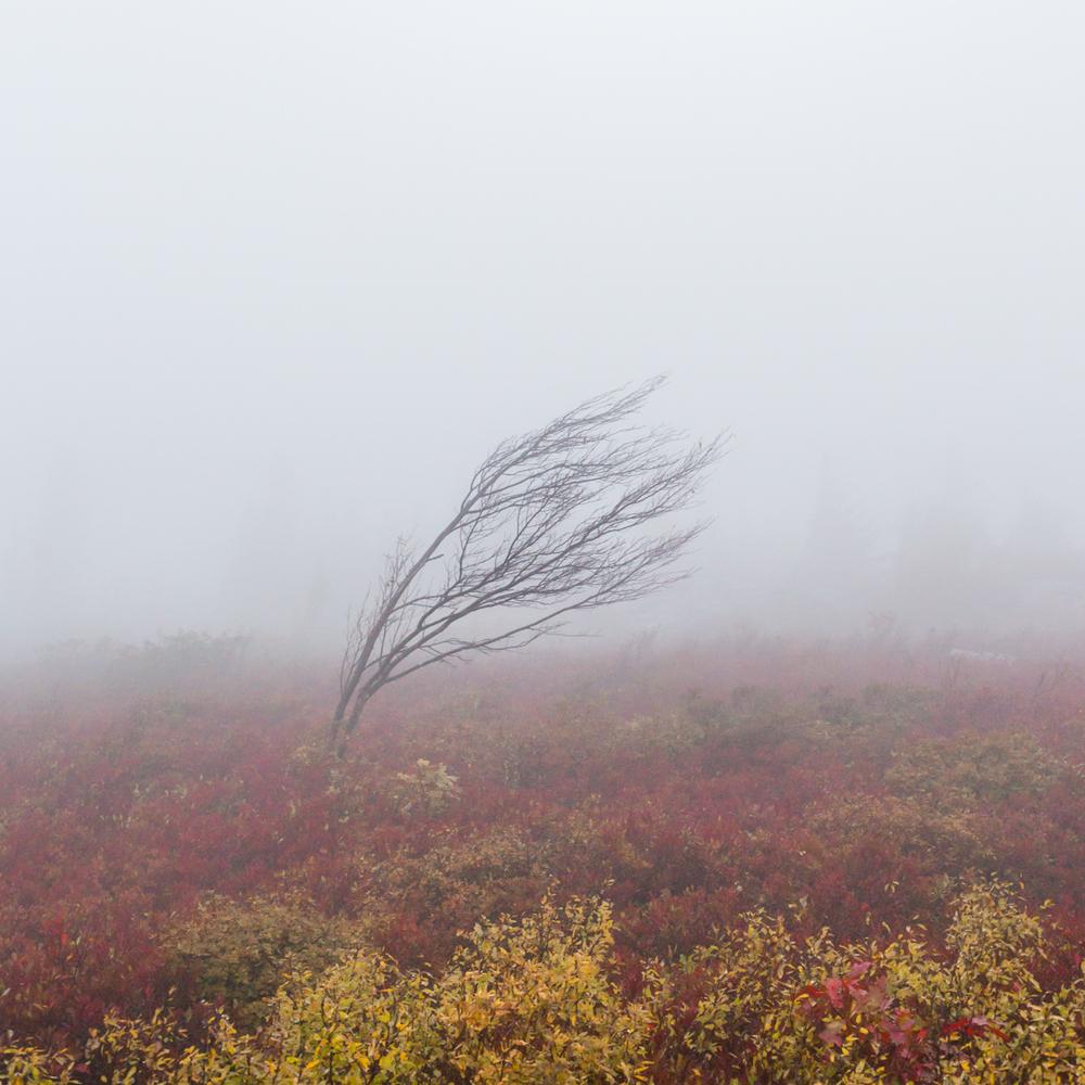 Dolly Sods in Fog