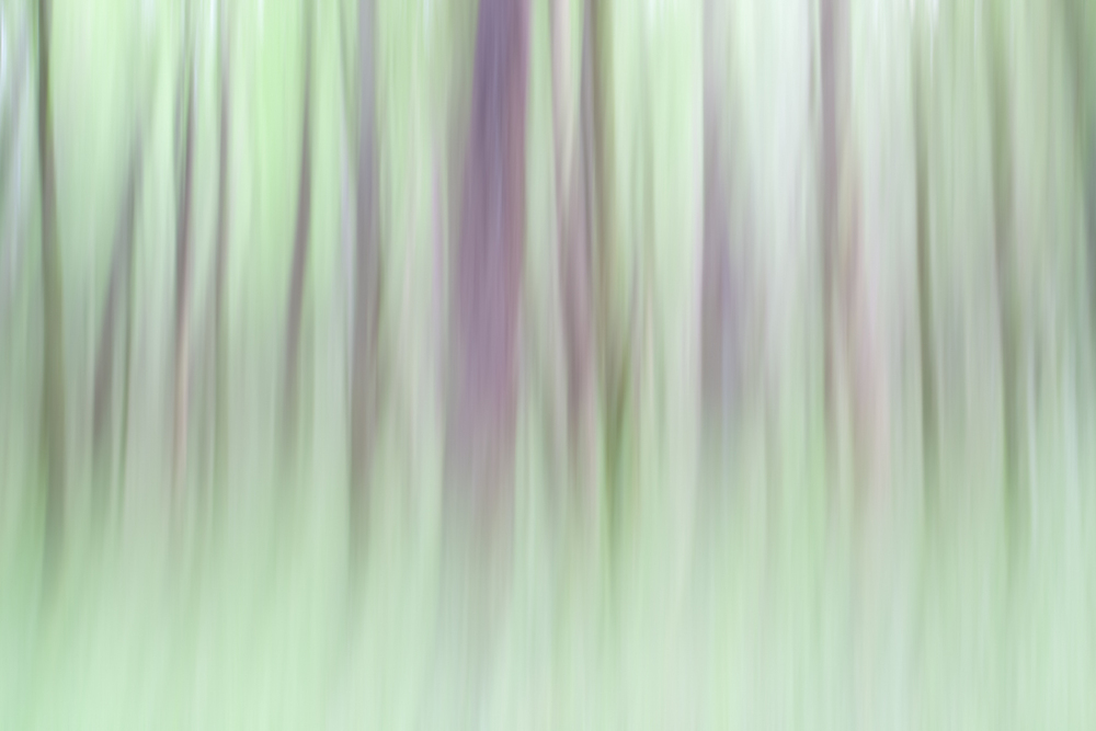 The Painted Woodland-1.jpg