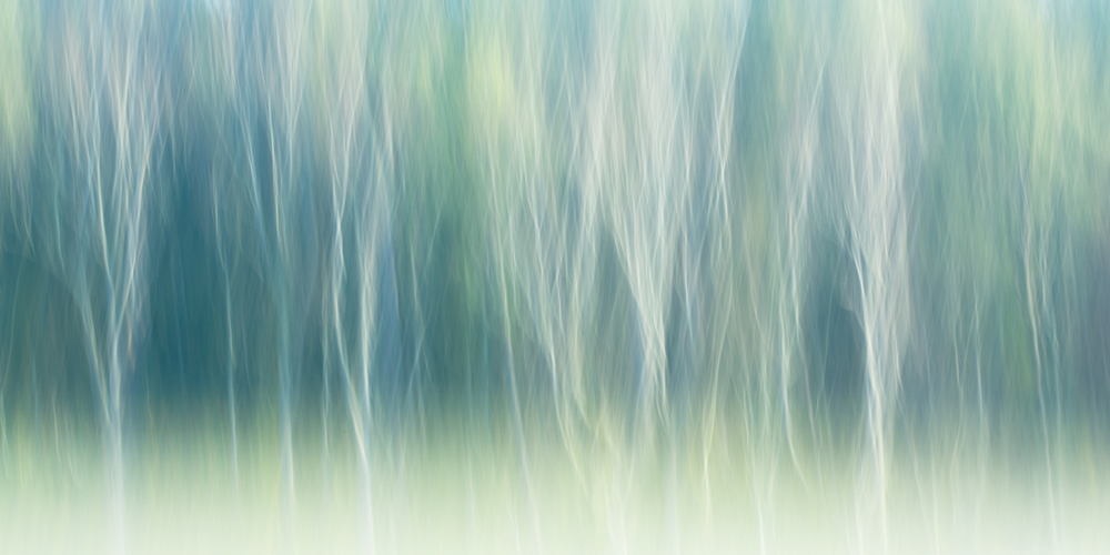 The Painted Woodland-7.jpg