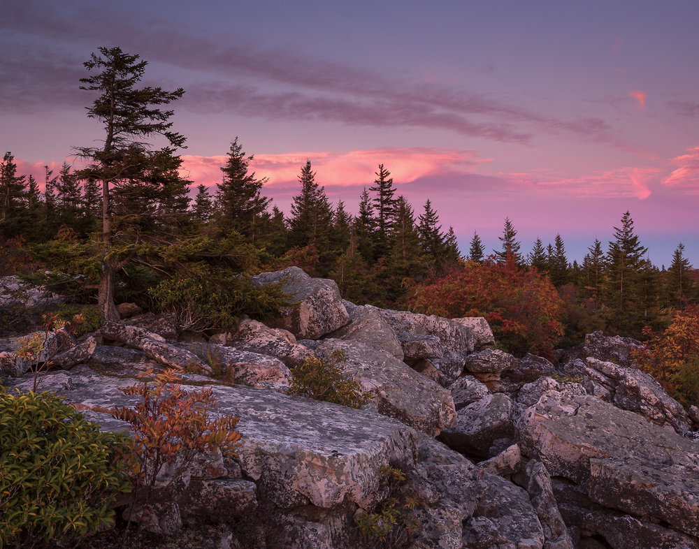 37 Dolly Sods Wilderness, WV