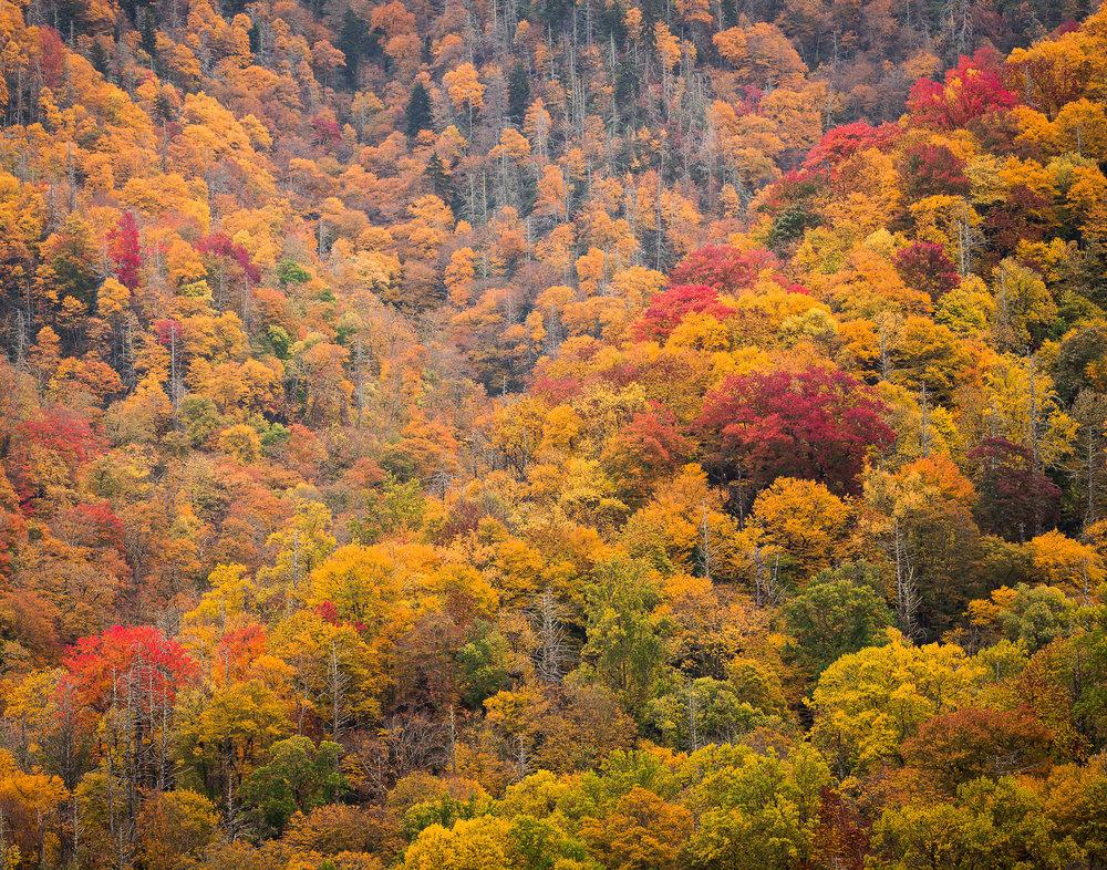 52 Great Smoky Mountains National Park, TN