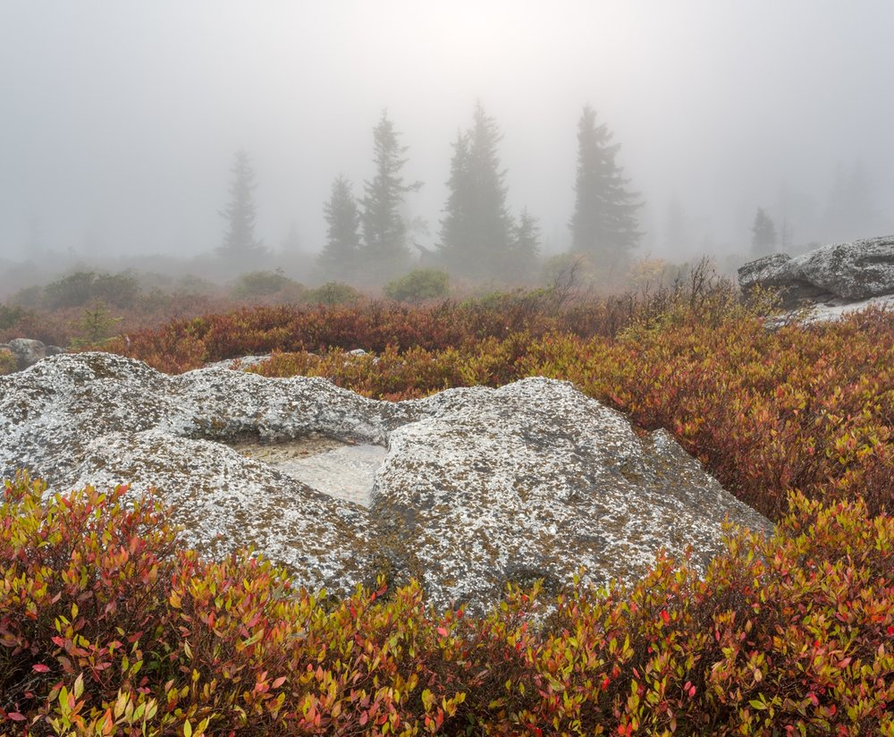 Dolly Sods in Fog