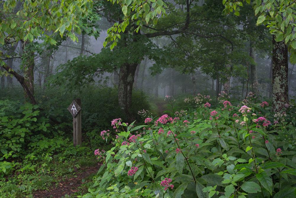 Appalachian Trail at Blue Ridge Parkway
