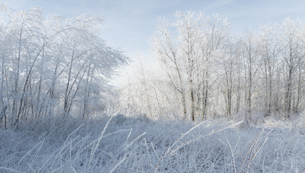 The Frost and the Boughs #5