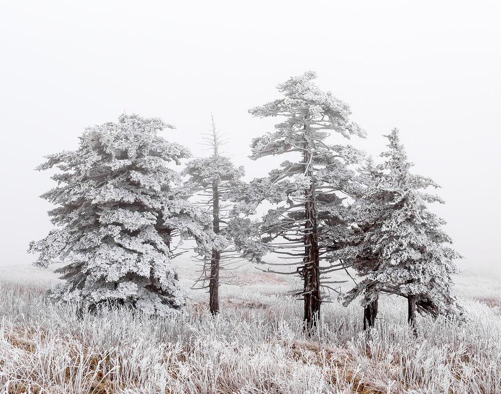 2. Whitetop Mountain, Virginia