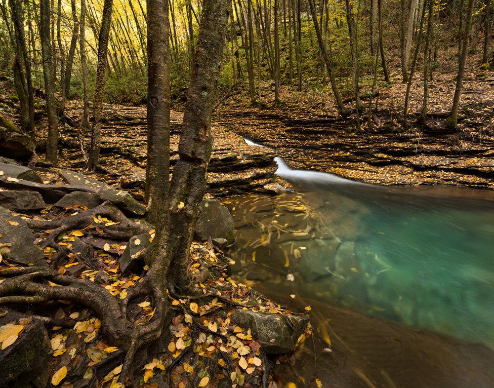64. Devil's Fork, Jefferson National Forest, Virginia