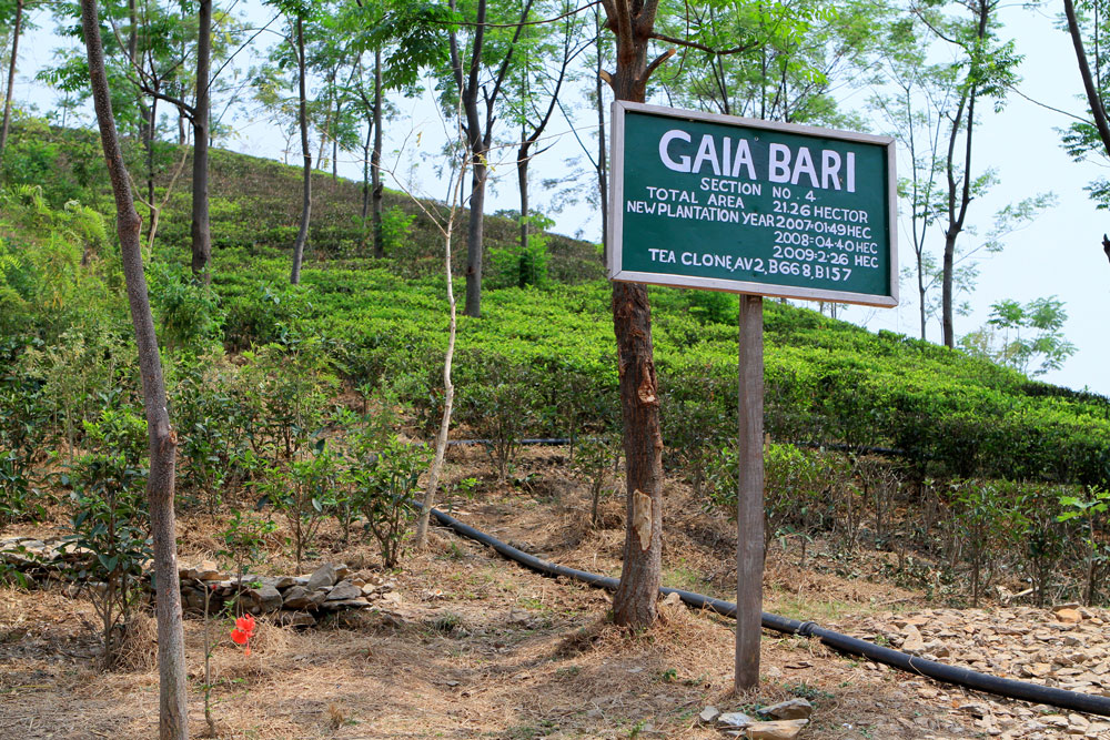 """Gaia Bari"" - Garden of Gaia, Potong, India"