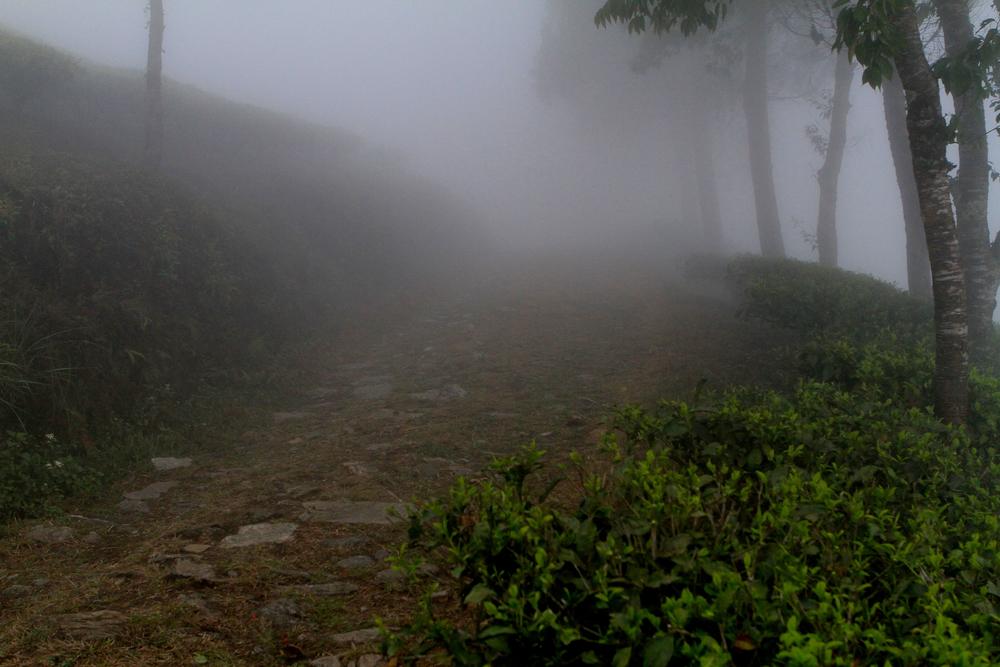 Misty Samabeong.jpg