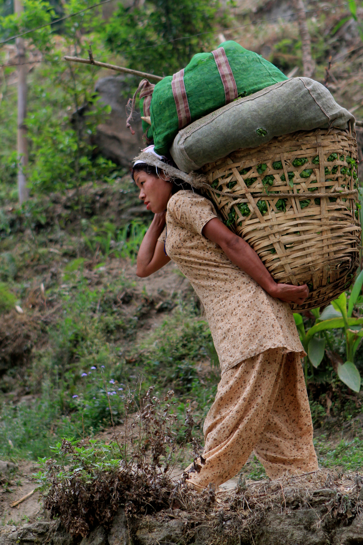 Mineral springs tea harvest.jpg