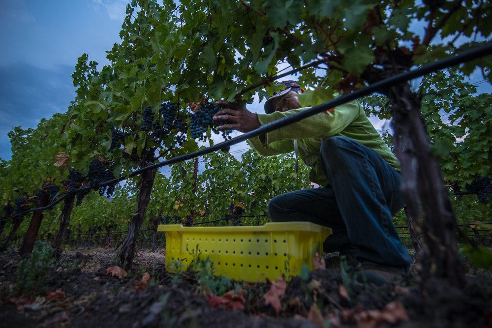 bob mcclenahan napa photographer harvest