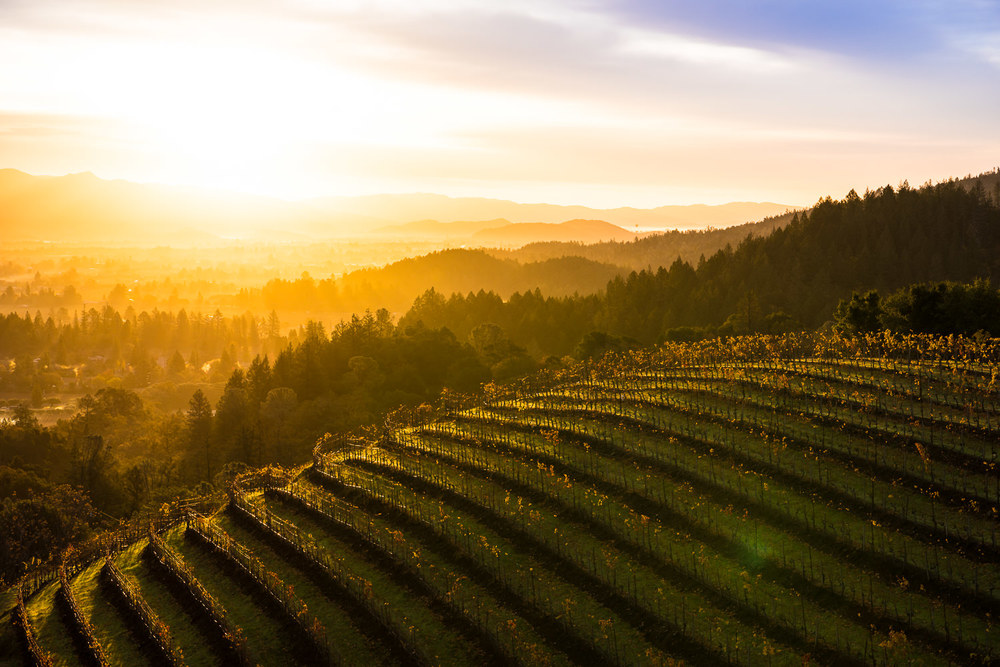 Sunrise over the Napa Valley
