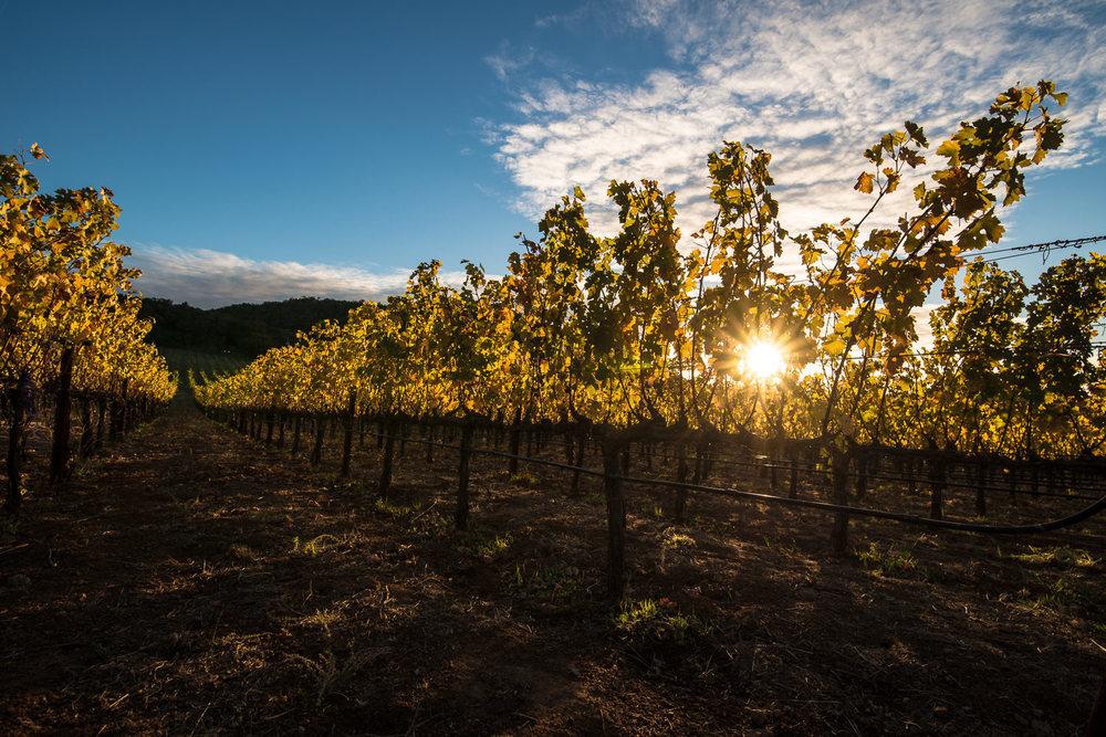 Chappellet Vines