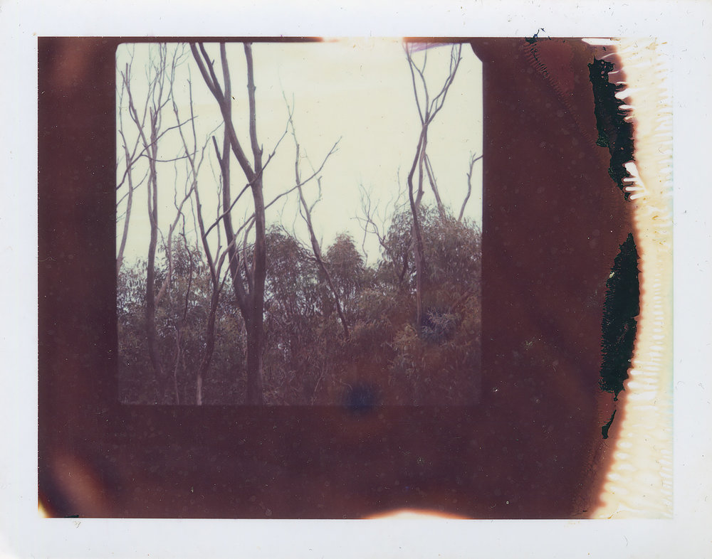 <i>Untitled #2</i>, 2007, Polaroid ER 669, 8.5 x 10.8 cm