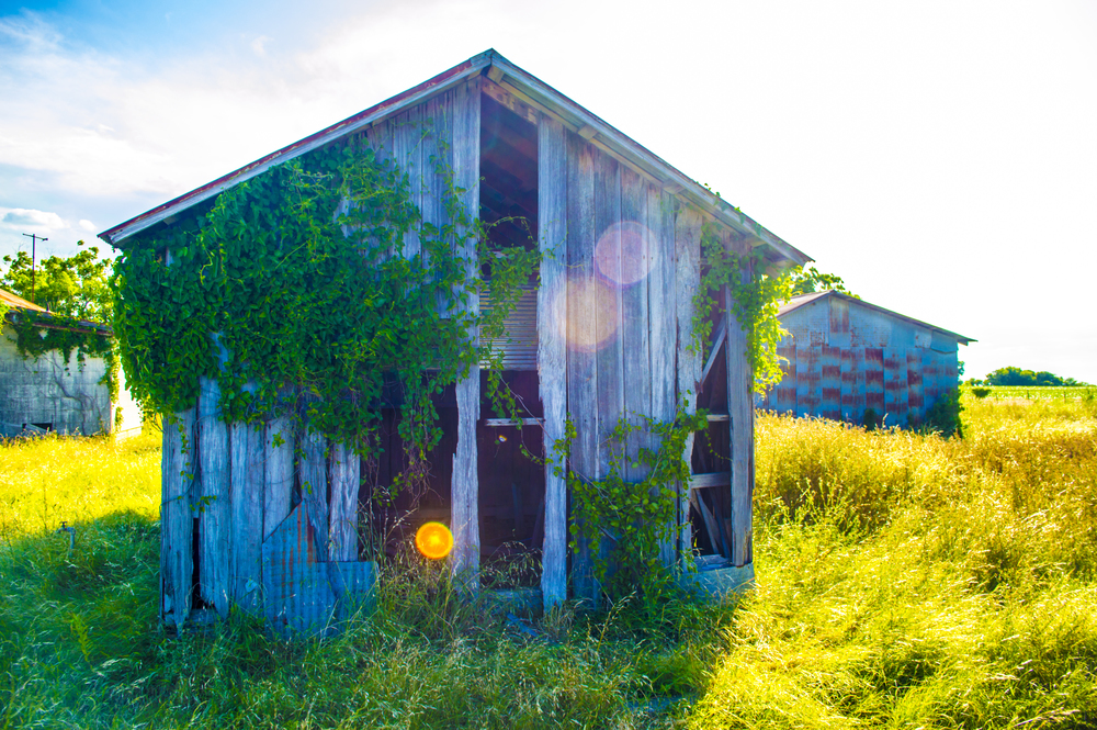 Overgrown Shed
