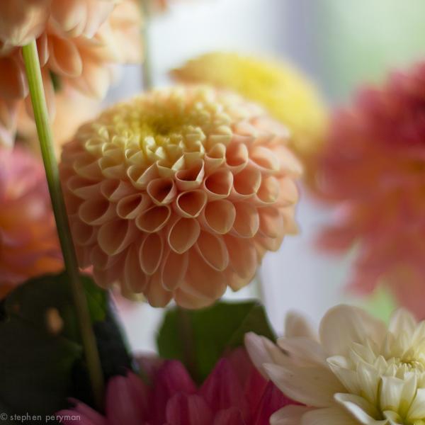 flowers-0222.jpg