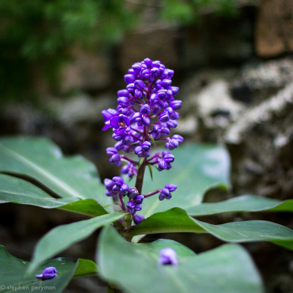 purple-4146.jpg