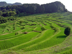 We plan to visit these rice paddies in Maniboso.