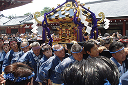 Sanja Matsuri, Tokyo, May 2017. We plan our trips to conclude with Japan's largest annual festival. Groups carry Shinto altars through the streets and they work hard. And EVERYBODY is out to see it. An amazing, exuberant, exciting event.
