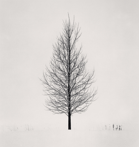 21. MK - Tree Portrait, Study 5, Wakoto, Hokkaido, Japan. 2005.jpg