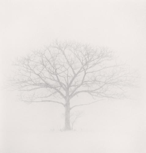 67. MK - Tree Portrait, Study 3, Wakoto, Hokkaido, Japan. 2002.jpg