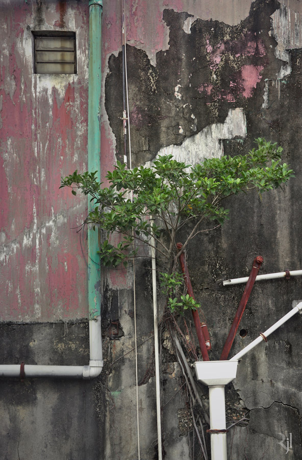 Wild Concrete #02.jpg