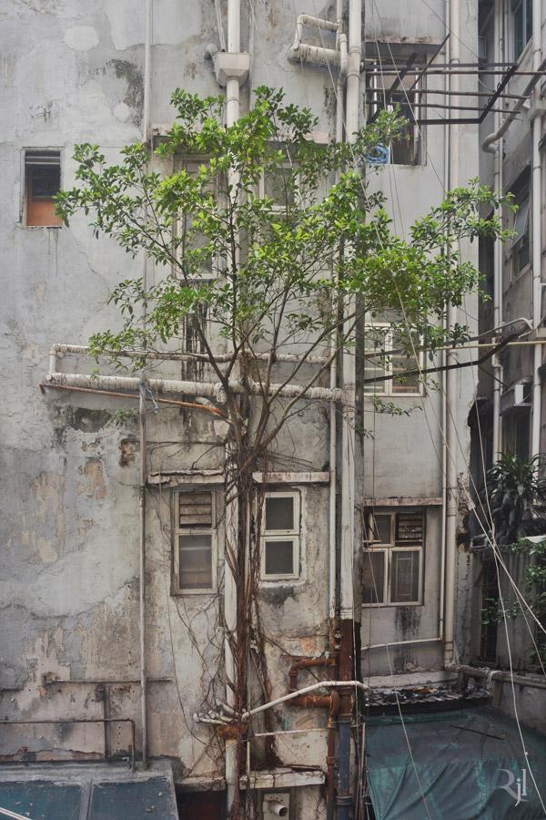 Wild Concrete #03.jpg