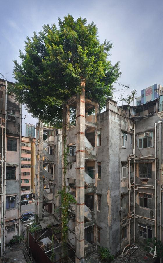 Wild Concrete #11.jpg