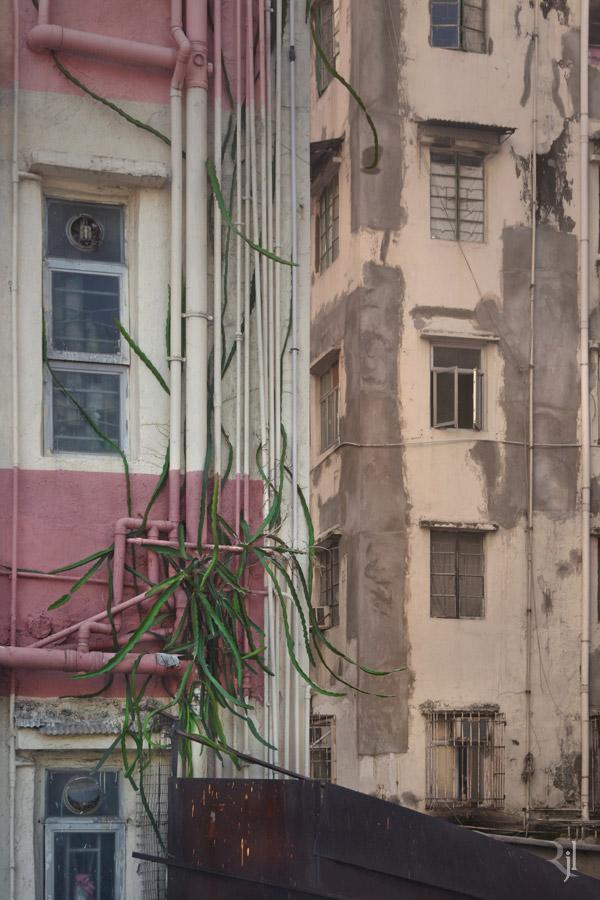 Wild Concrete #07.jpg