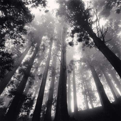 Michael Kenna- Tree Canopy, Shosanji, Tokushima, Shikoku, Japan. 2010.jpg