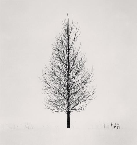 Michael Kenna,  Tree Portrait, Study 5, Wakoto, Hokkaido, Japan. 2005, silver gelatin print, 25 x 25 cm .jpg