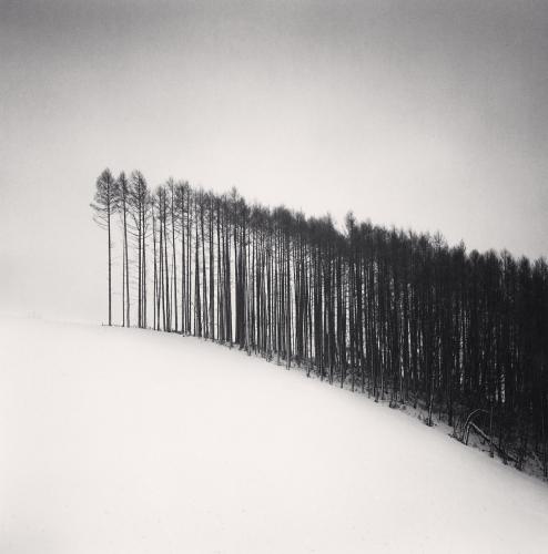 Forest Edge, Hokuto, Hokkaido, Japan. 2004