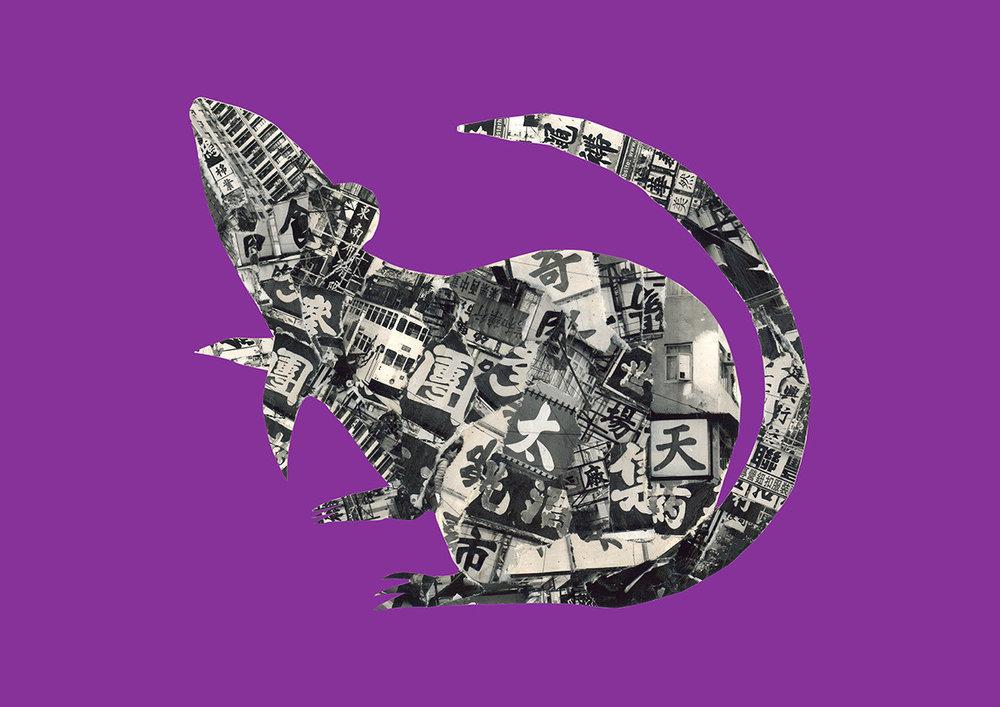 Rat in Hong Kong [dark purple]